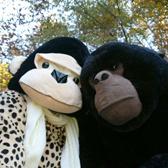 gorilla-s