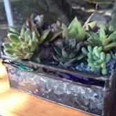 plant-s